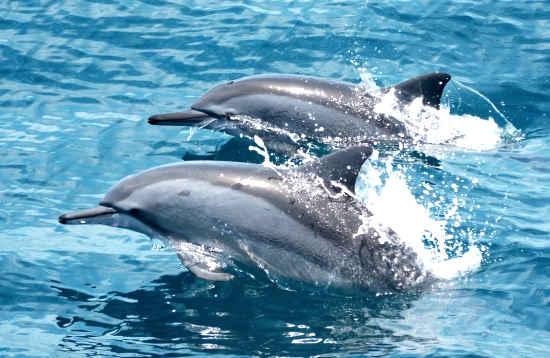 Mini dolfijn tour Puerto del Carmen Lanzarote
