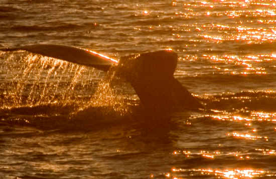 Boottocht dolfijnen & zonsondergang Lanzarote